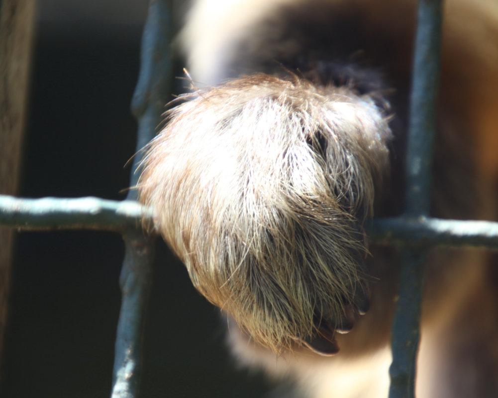 kosmeti_blog_content_animal-experiment_quer_1